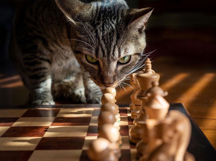 Strategiarbete